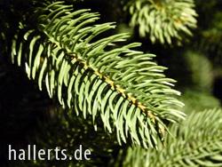 künstliche Weihnachtsbäume mieten | Frankfurt, Mannheim, Darmstadt und Umgebung | Niemeyer Event-Service